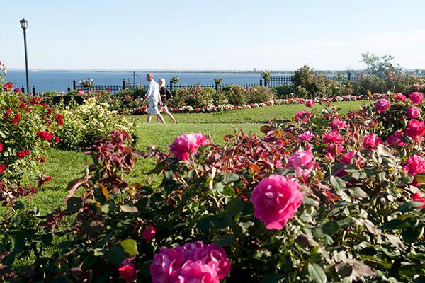 Leif Erickson Park Rose Garden Explore Minnesota