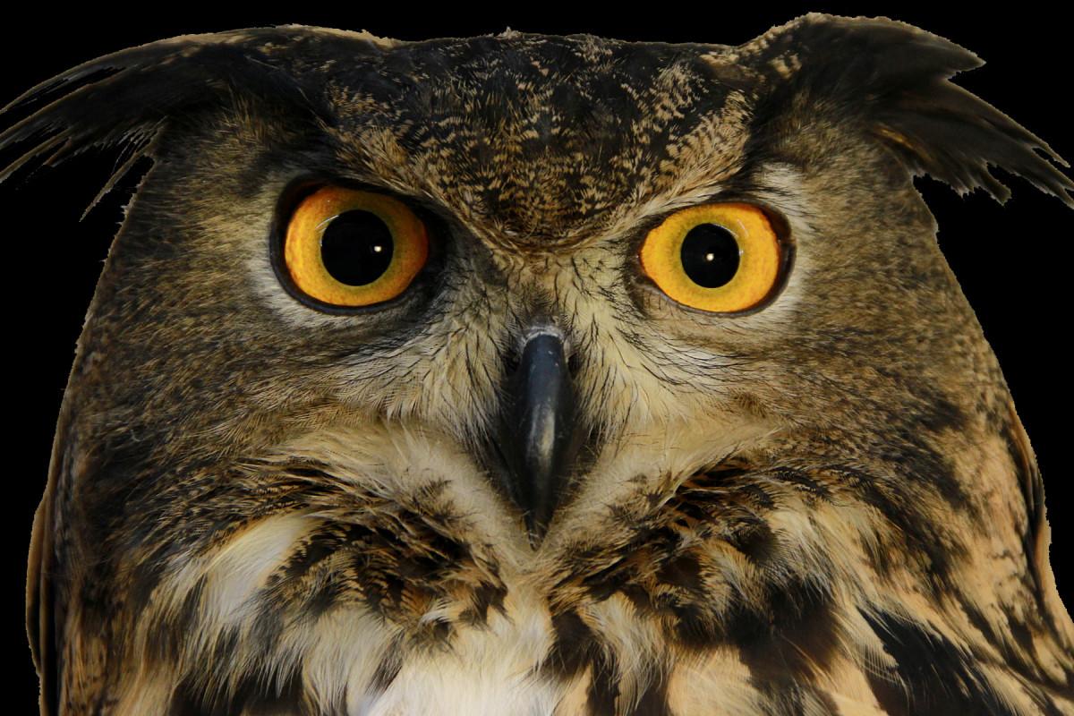 Www Owl Int
