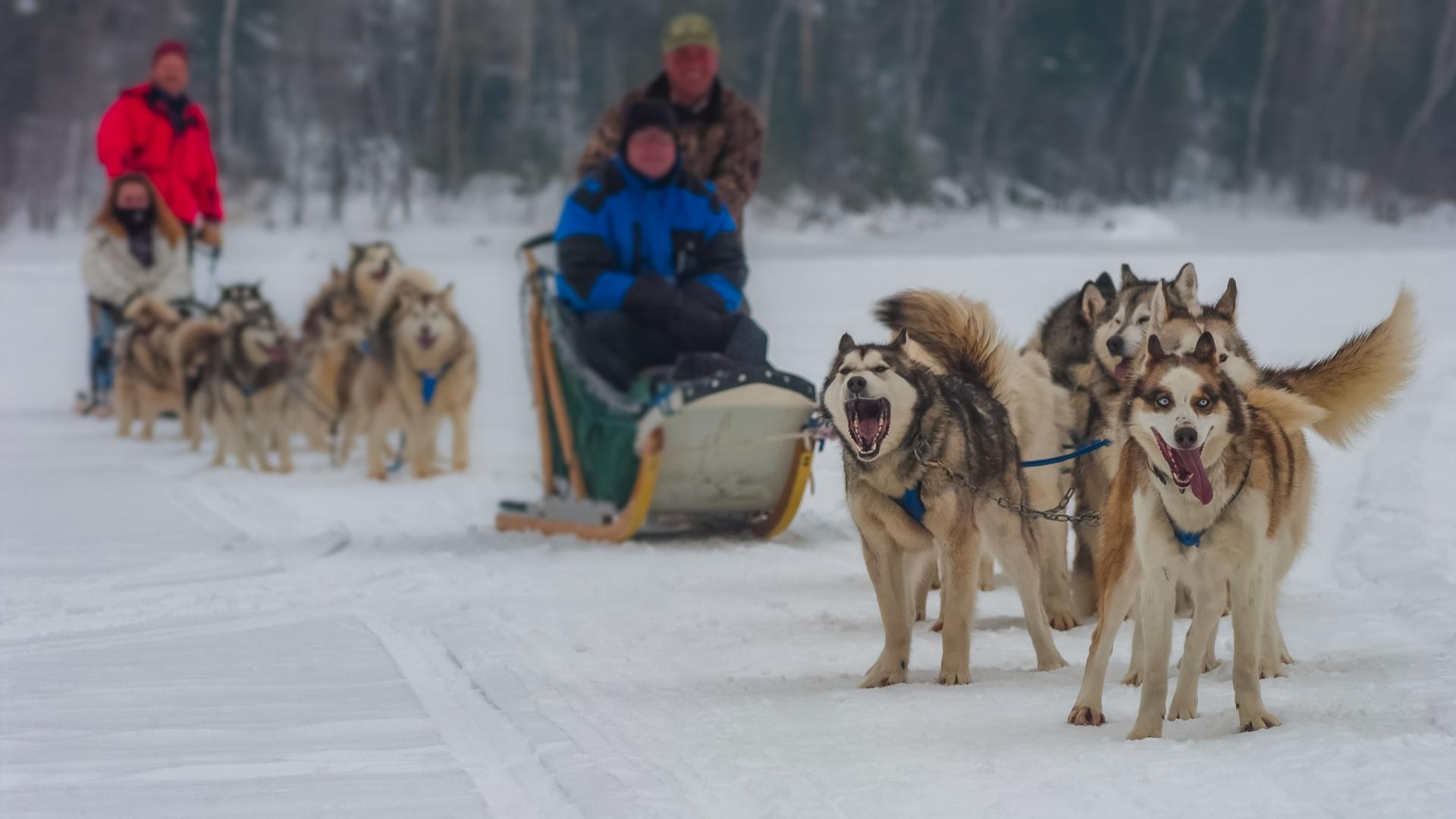 Two teams of dog sledders near Ely, Minnesota