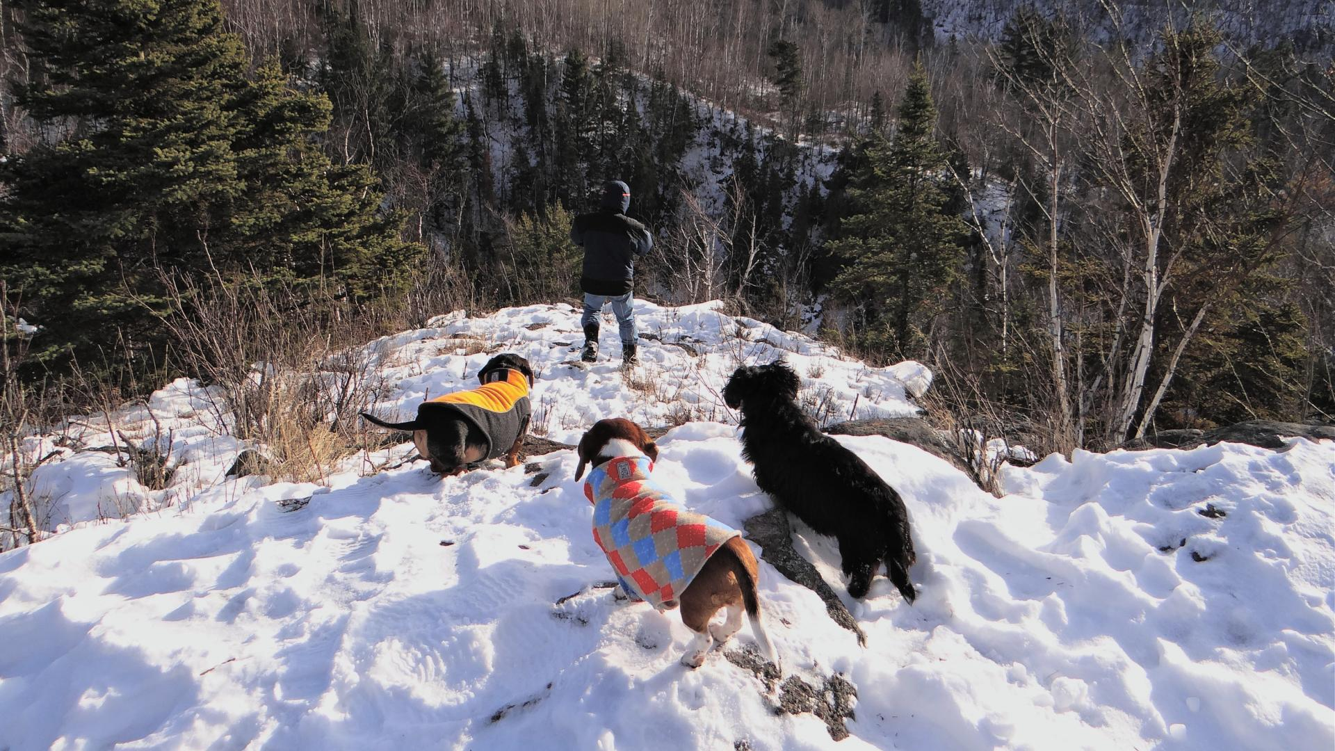 Winter hike with dogs at Tettegouche State Park