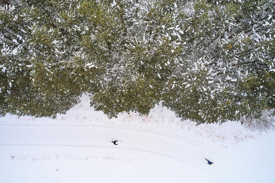 two cross-country skiers in woods from above