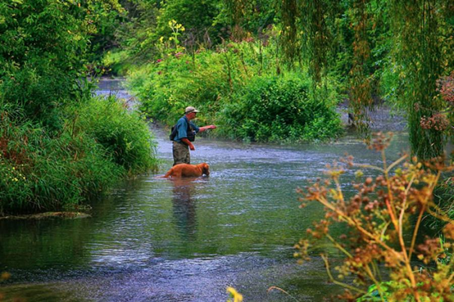 Man and dog fly fishing in southeast Minnesota