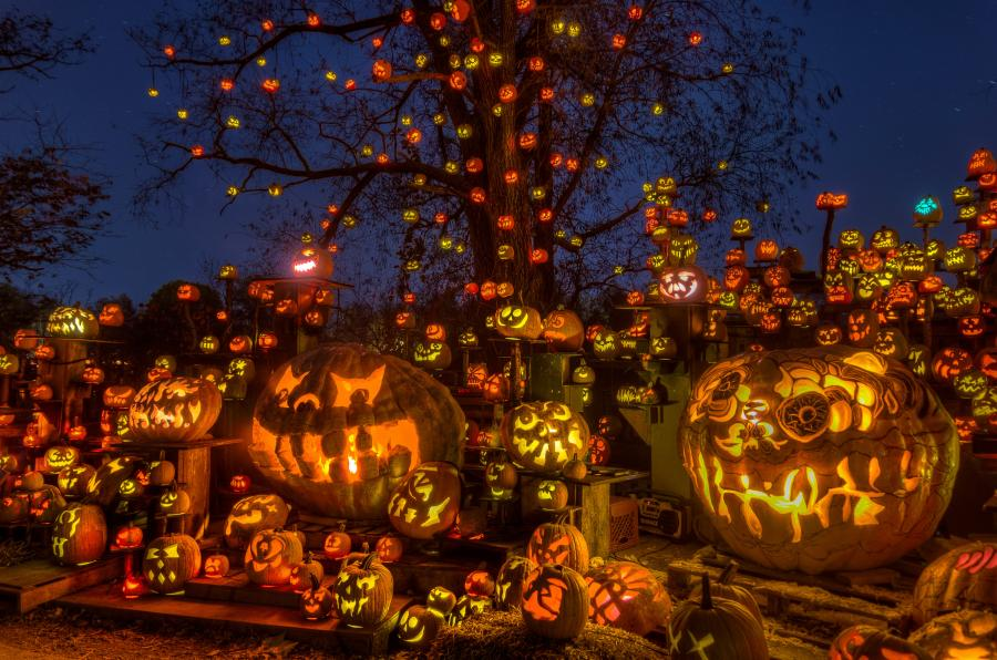 More than 5,000 carved glowing pumpkins at the Minnesota Zoo Jack-O-Lantern Spectacular
