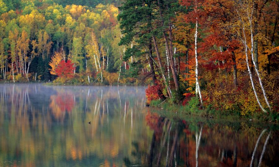Chippewa National Forest fall colors