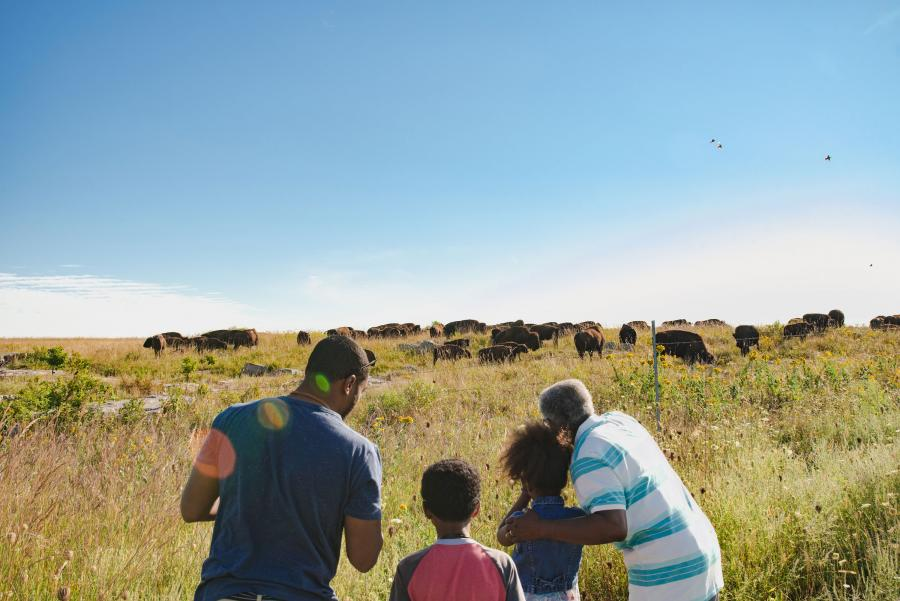 Family viewing bison herd at Blue Mounds State Park
