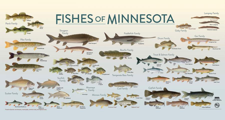 Fishes of MN
