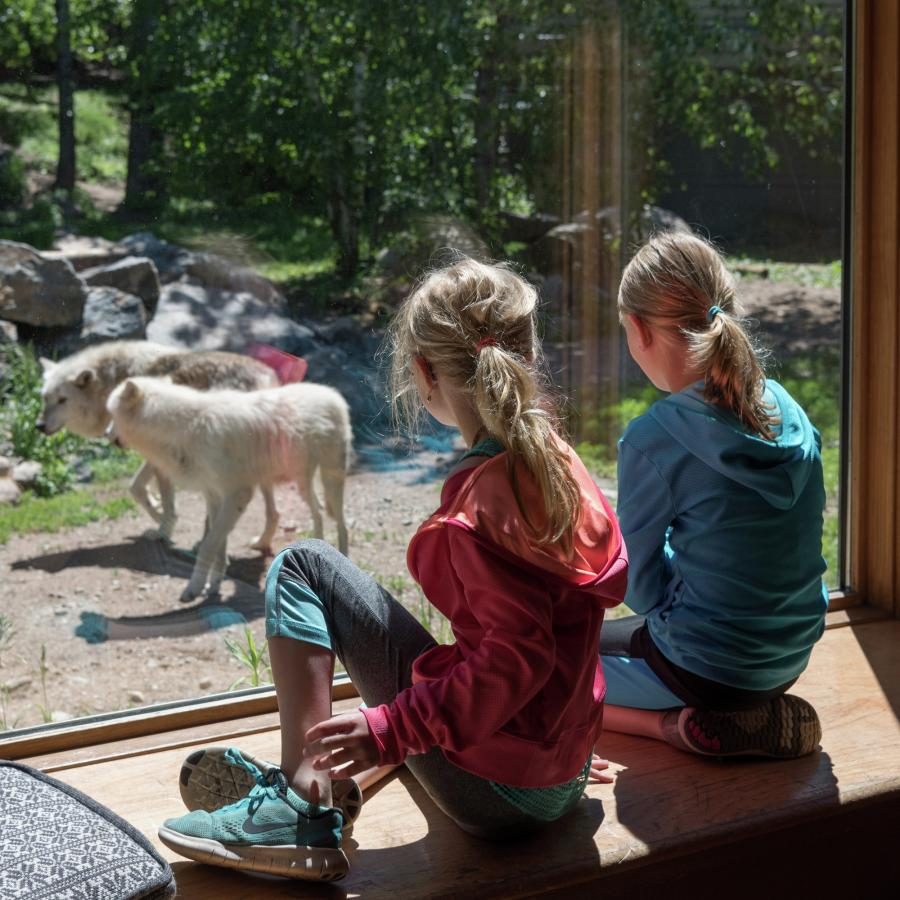 Two girls look at wolves through glass at the International Wolf Center