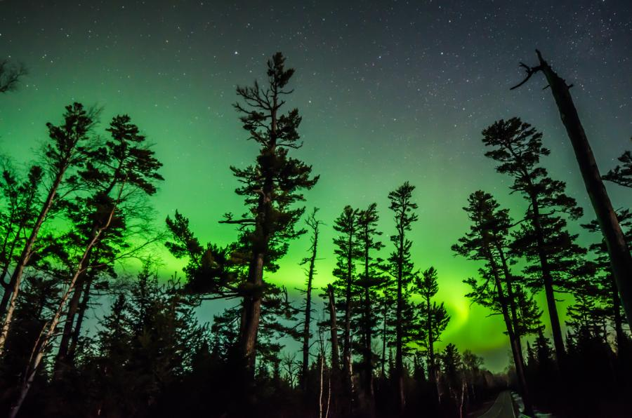 Green sky over pine trees on the Gunflint Trail