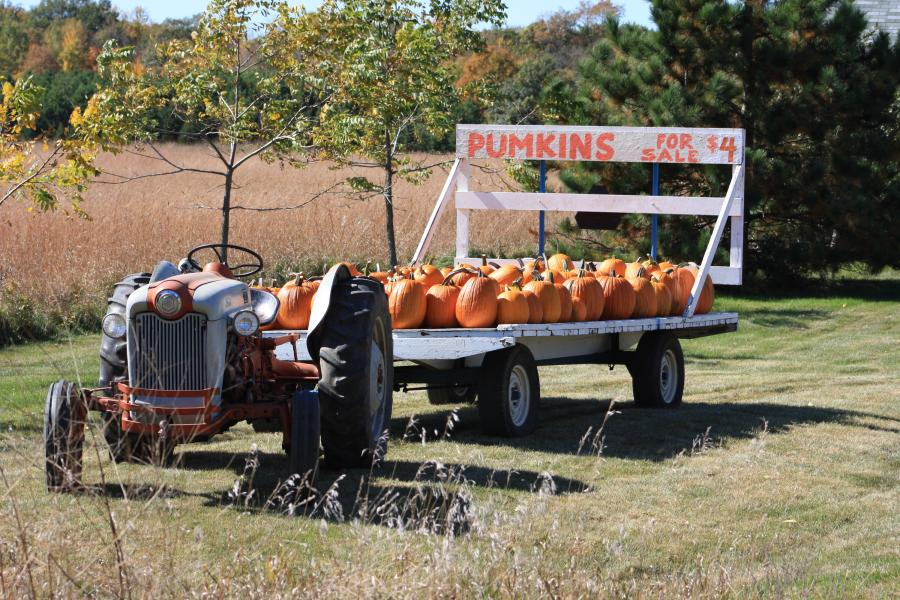 Pumpkins for sale on a tractor