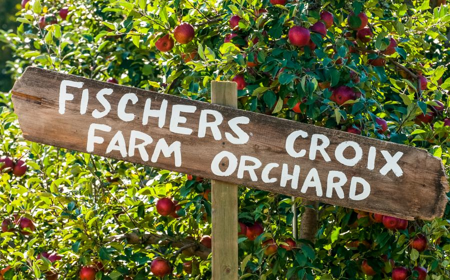 Dozens of Minnesota apple orchards are open to pickers in the fall including the Fishers Croix Orchard
