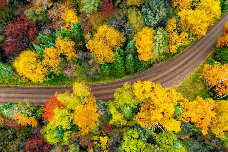 North shore roads fall colors
