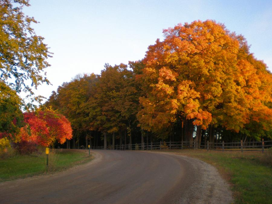Gravel road and fall foliage