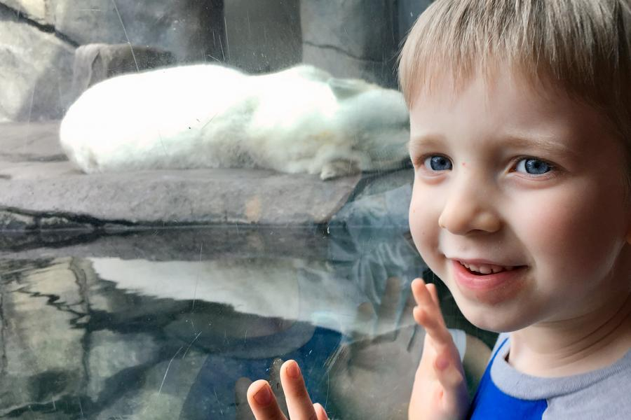 Como Zoo boy at polar bear exhibit