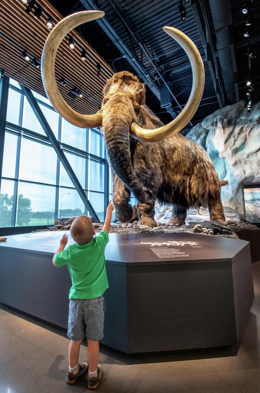 Boy looking up at a woolly mammoth replica at the Bell Museum