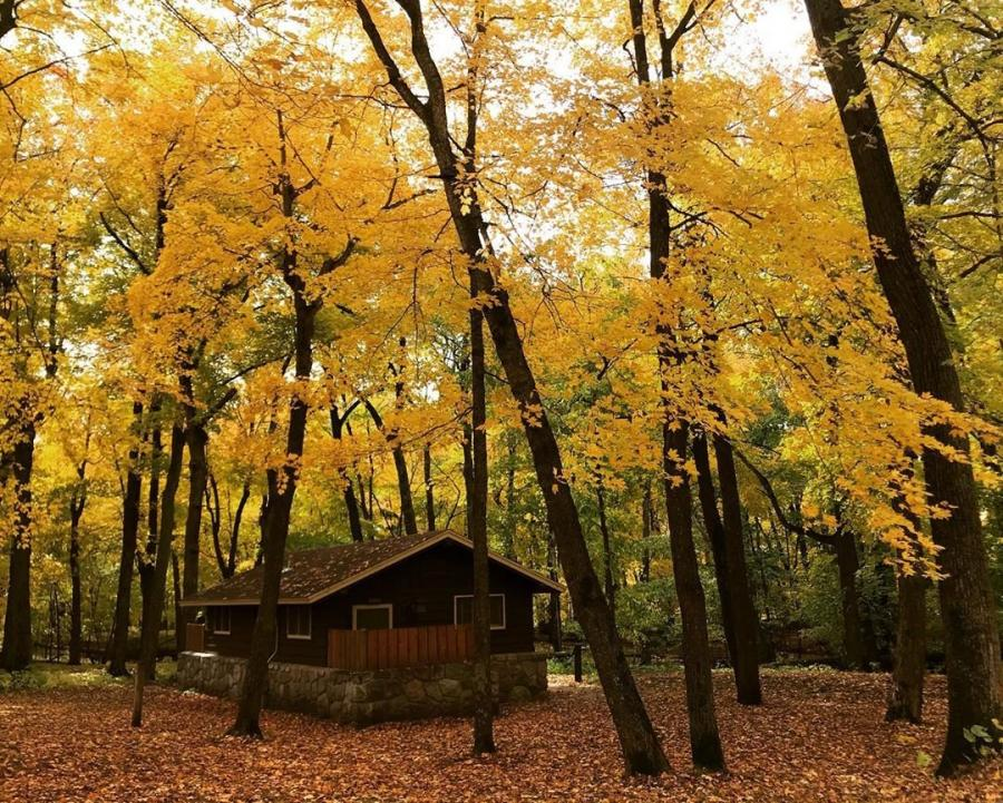 A camper cabin in a hardwood forest in the fall