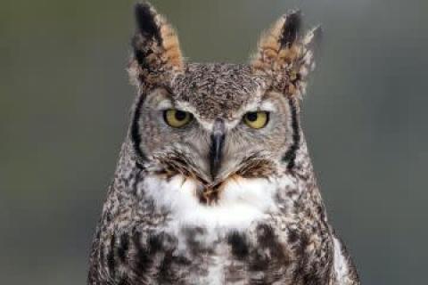 International Owl Center Explore Minnesota