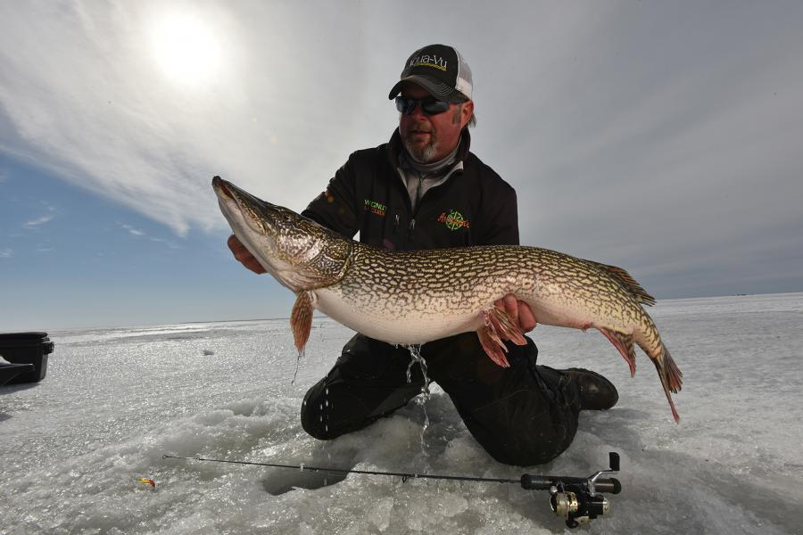 Captain Tim Wingnut Hill holding a pike on Lake of the Woods