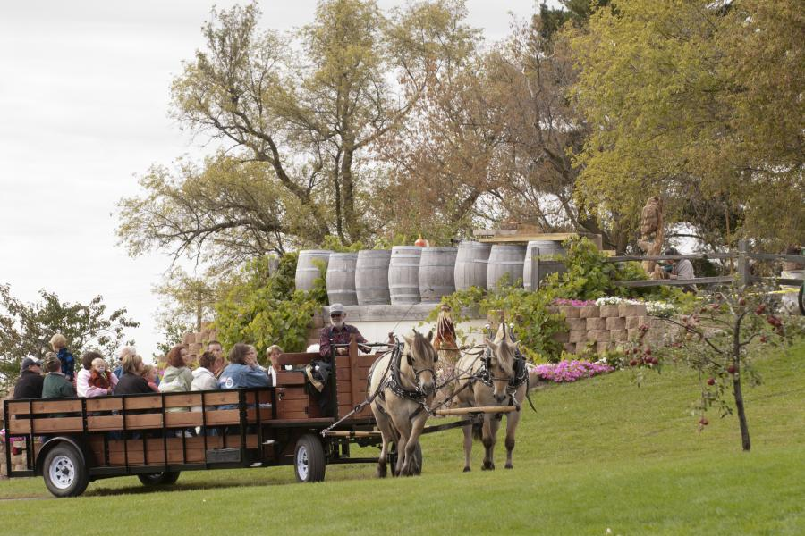 Horse drawn wagon tour of Carlos Creek Winery