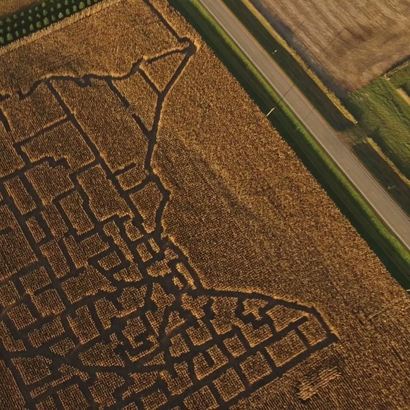 Corn maze at Rock River Pumpkin Festival in Edgerton