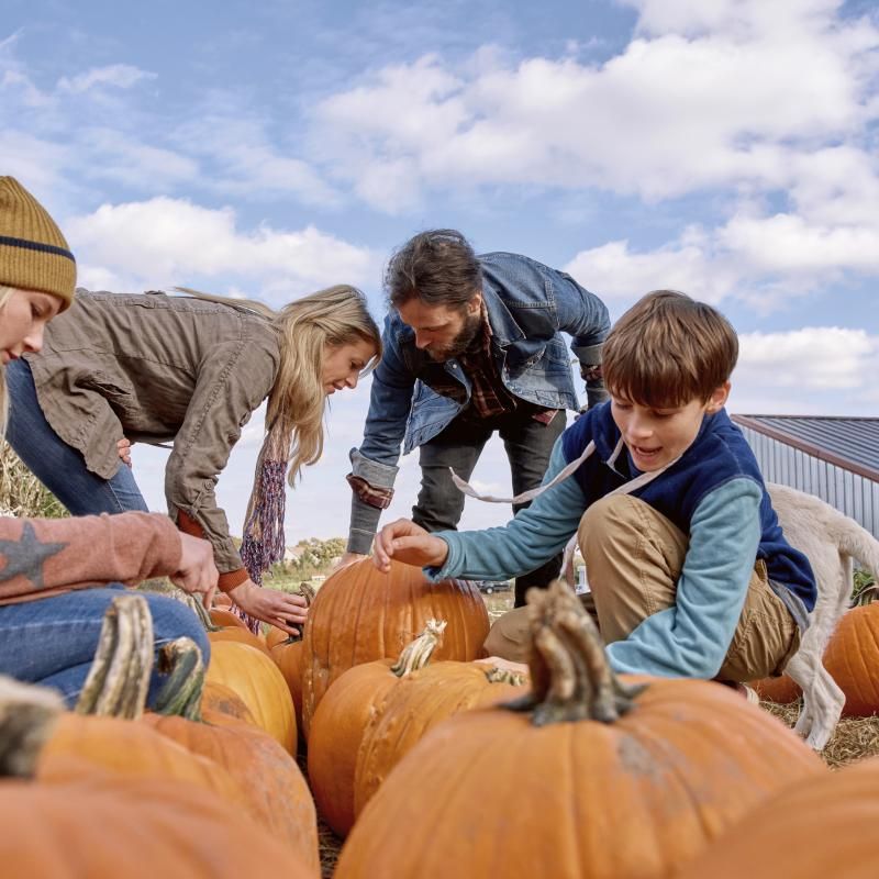 Family picking pumpkins together