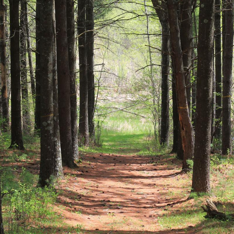 Forested path in Moose Lake State Park