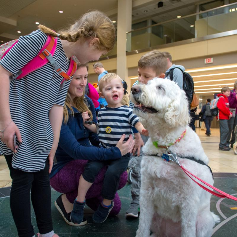 MSP Airport animal ambassador